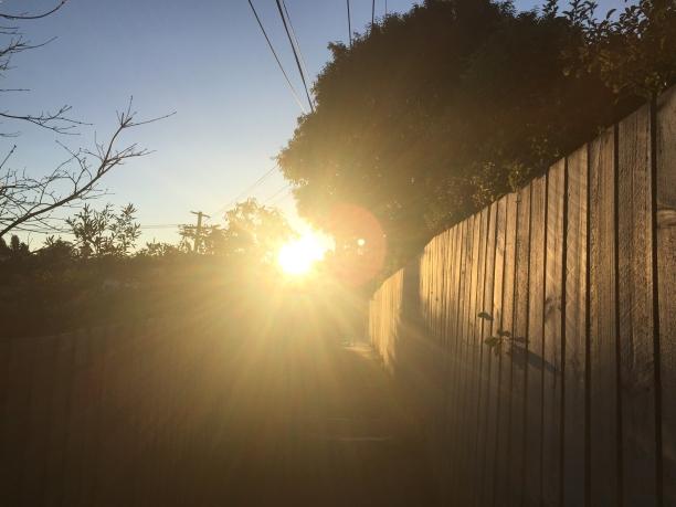 avo sun